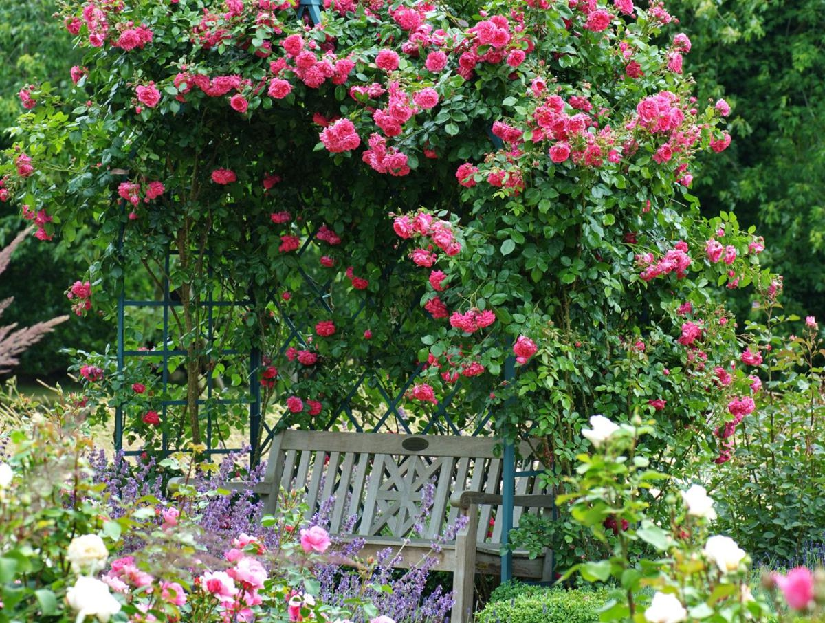What's high on list of climbing roses