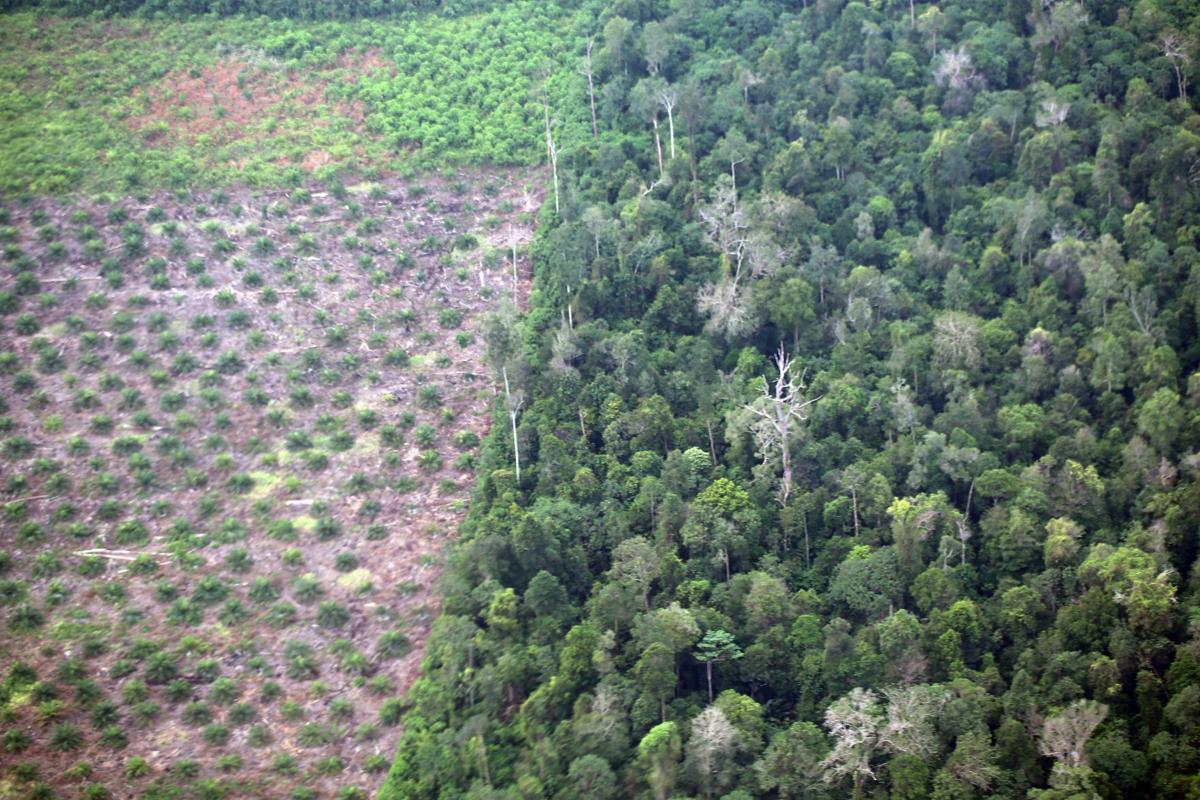 Palm Oil: contrast