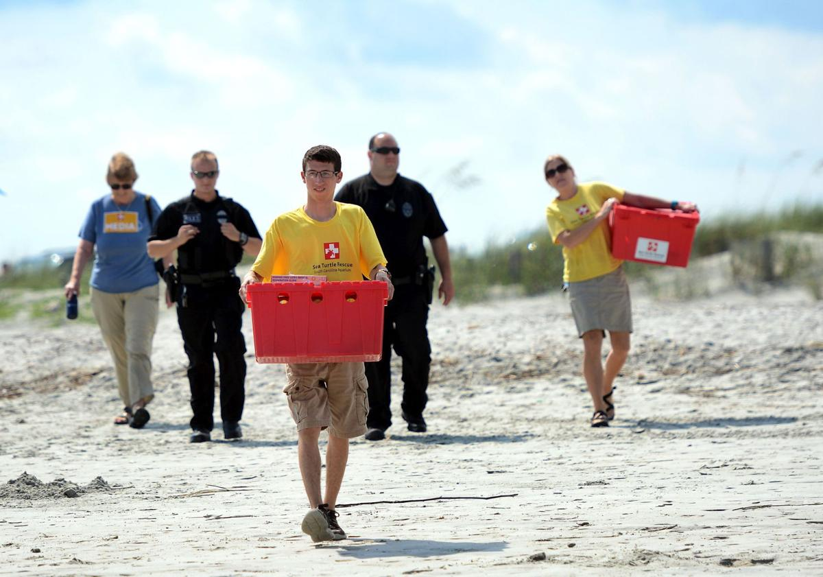 Sea Turtle Release at Folly Beach