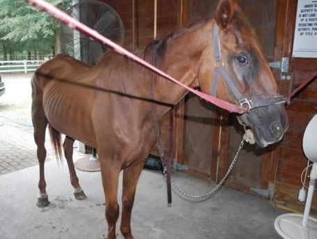 Sick horse needs donations to survive