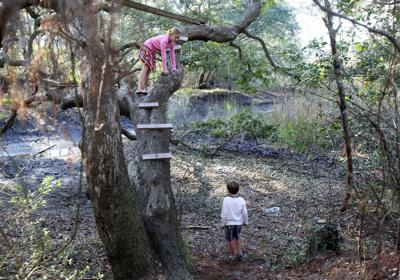 Shem Creek woods where neighborhood plays now being conserved