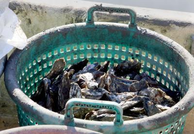 South Carolina Oysters (copy) (copy)