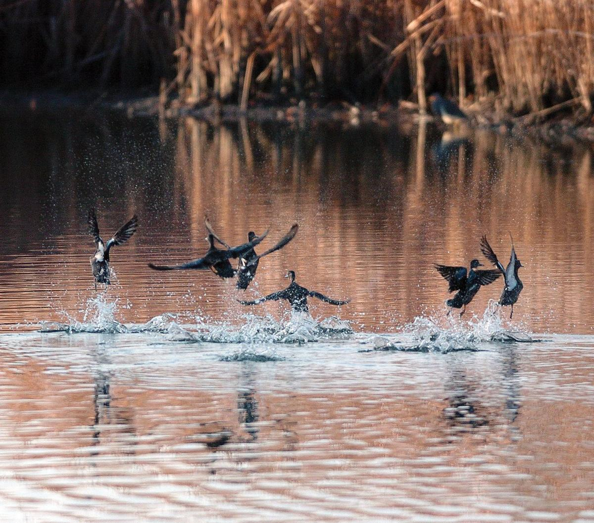 Lowcountry Waterfowling: Tips for every experience level
