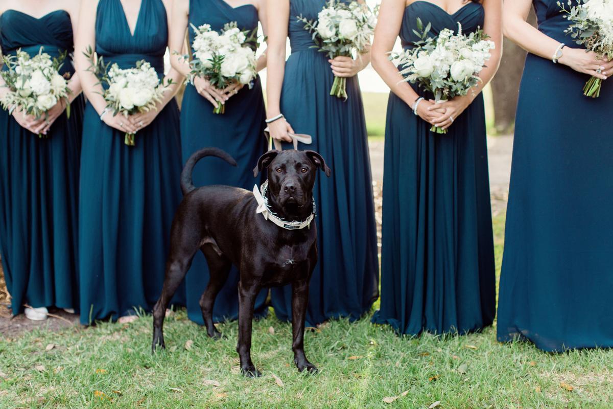 dog at wedding.jpg