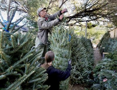 Christmas trees expected to cost a