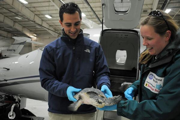 Sick sea turtles get luxurious ambulance ride