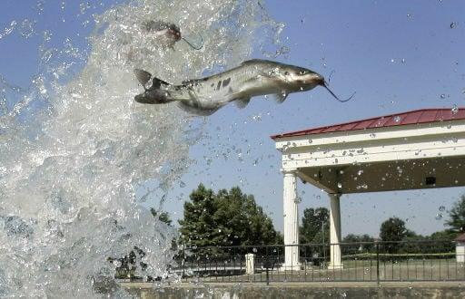 Catfish proposal runs risk of trade war