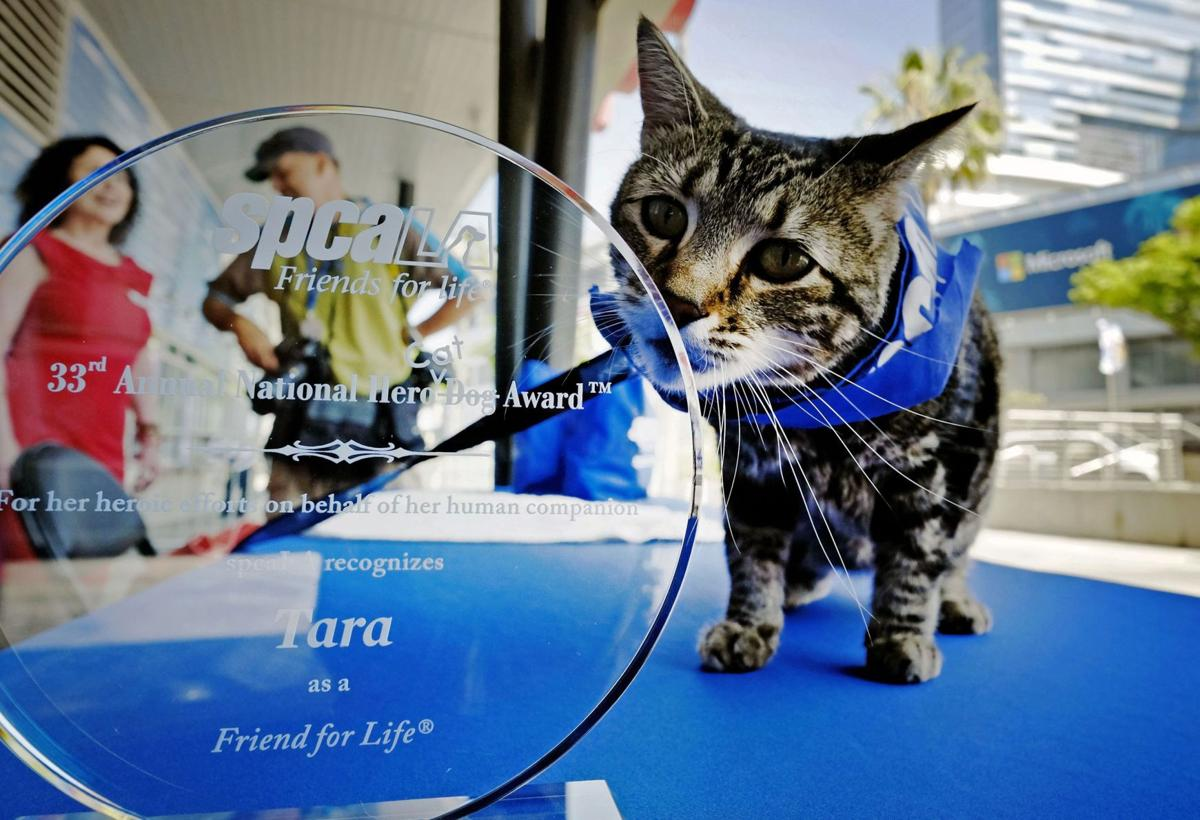 Cat wins shelter's Hero Dog award for saving kid from canine