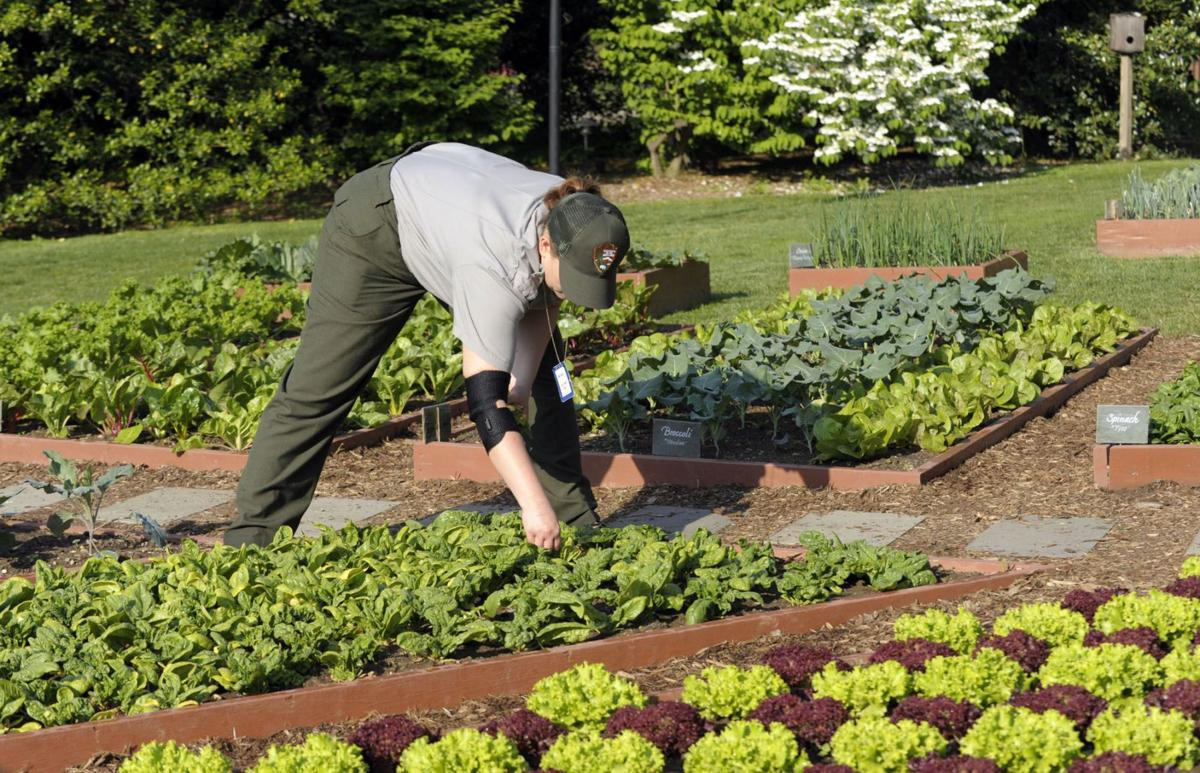 Tips for high yields in a small or thirsty garden