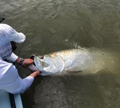 Tarpon fishing