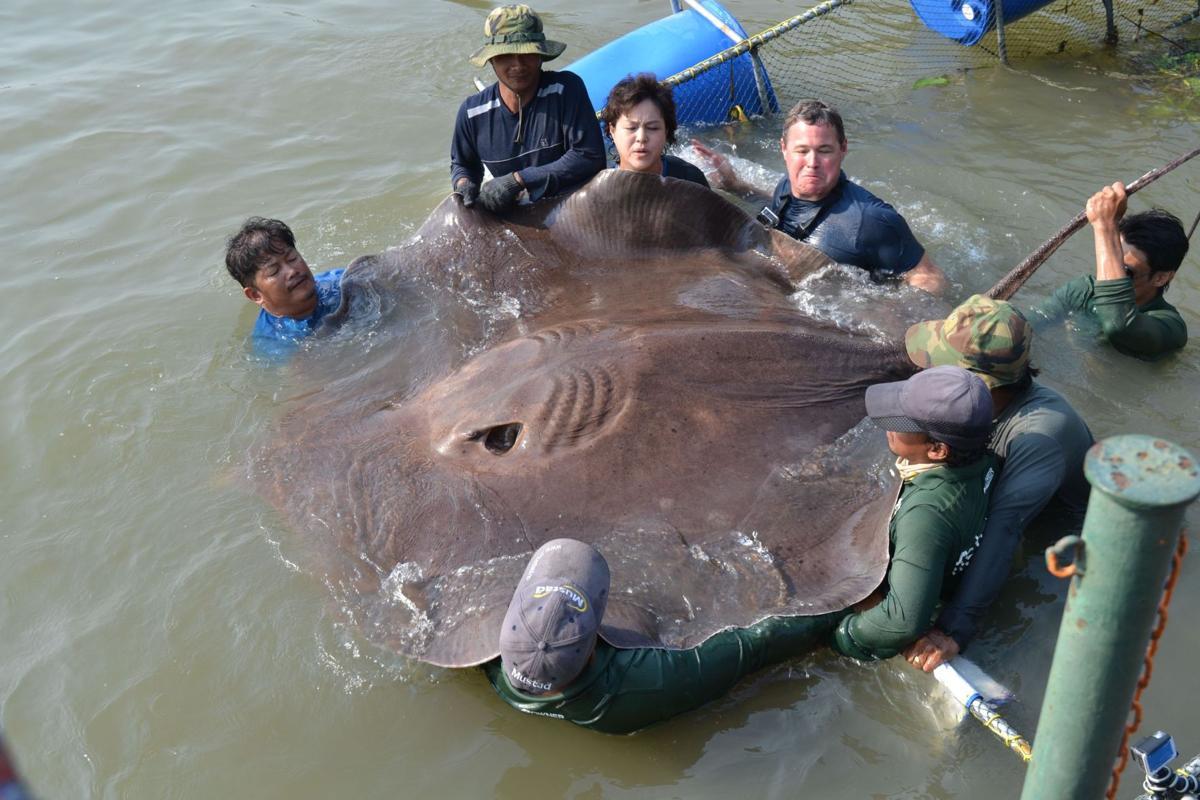 Aquarium to fete TV animal advocate Jeff Corwin