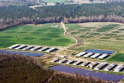 North Carolina hog farm (copy)