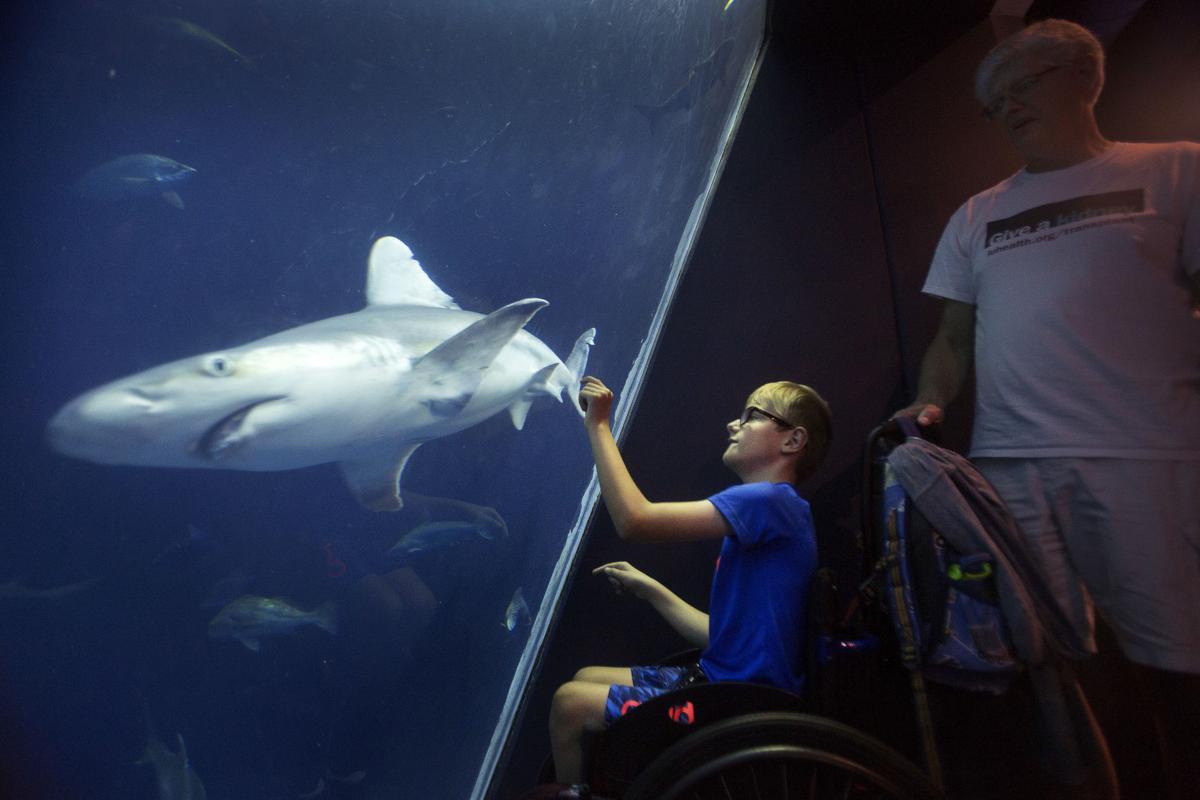 LP Shark Week PRINT LEAD 072518_01.jpg