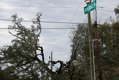 trimmed tree riverdale st andrews blvd.jpg