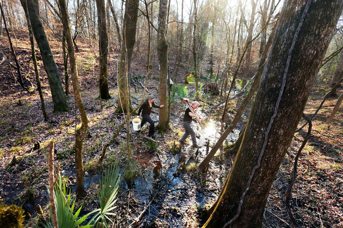 main conservation easement Four Hole Swamp (copy) (copy)