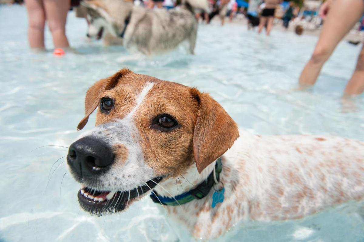 Dog Day Afternoon waterpark