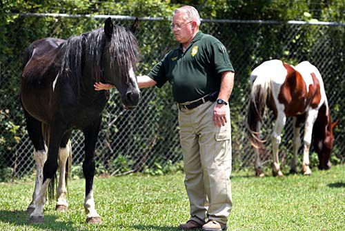 Horses to be farmed out