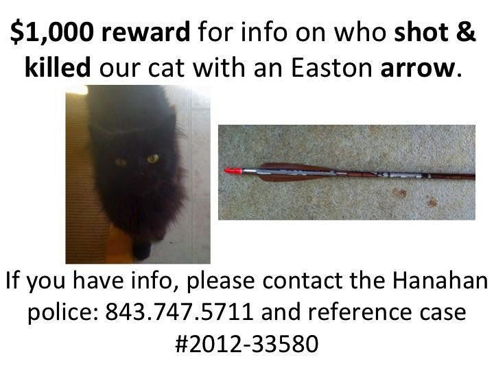Hanahan resident offering $1,000 reward after cat shot with arrow