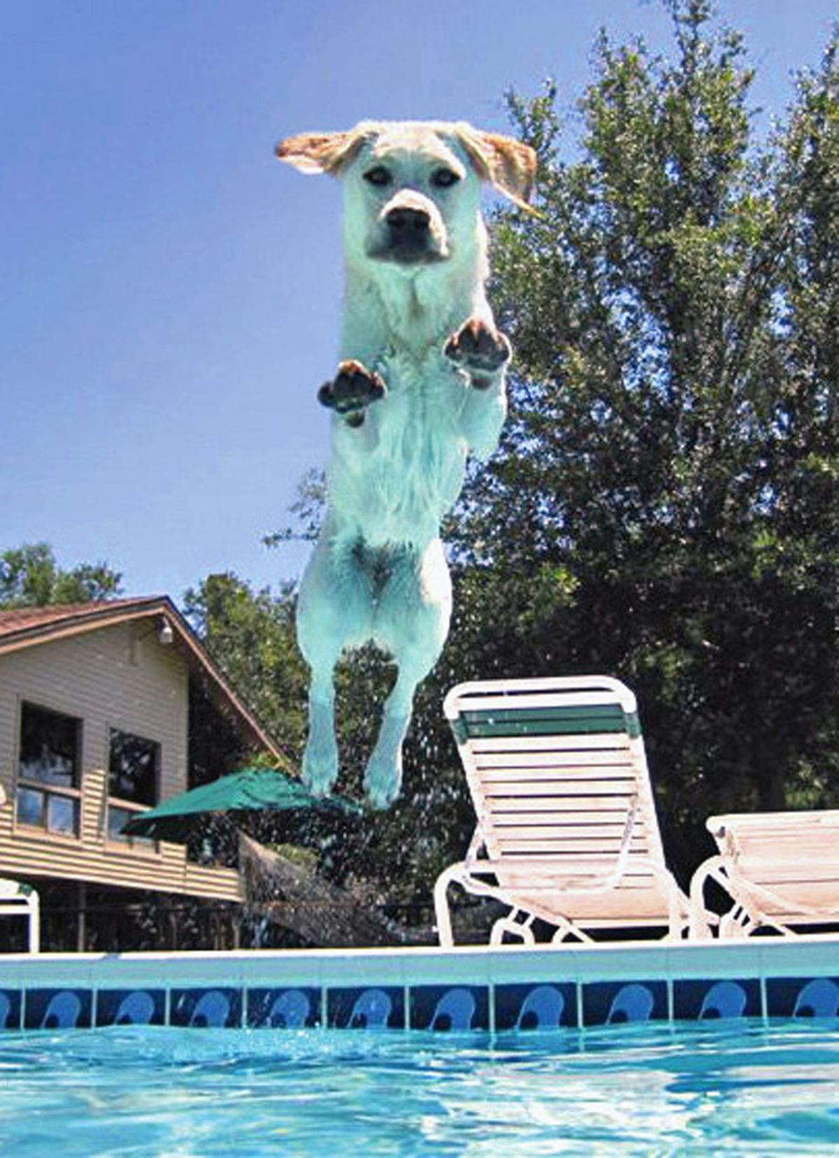These dogs take meaning of Leap Year to new level