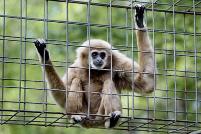 Summerville-based league helped save primates during Ebola crisis