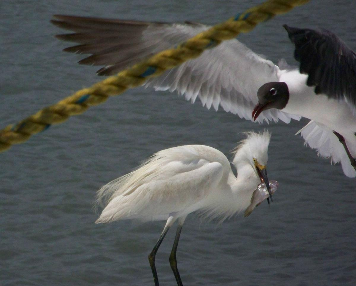 """Reader photos: You showed us """"Lowcountry wildlife,"""" now let's see """"Faces"""""""
