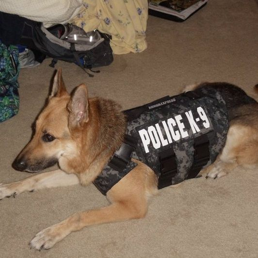 Hanahan police dog Shadow dies during training