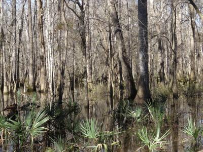 WassamassawSwamp (copy)