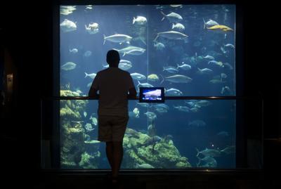 SC Aquarium Great Ocean Tank (copy) (copy)
