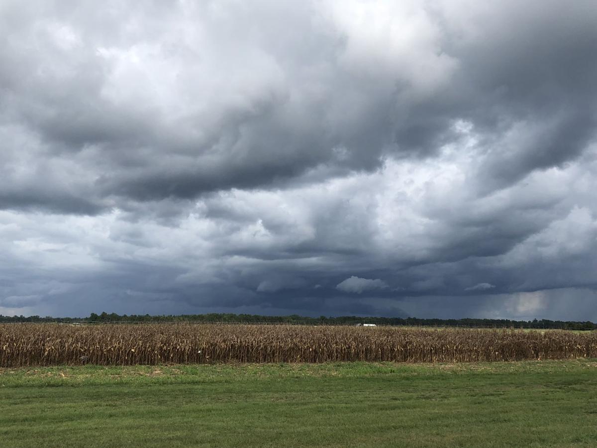 Pee Dee storm crops