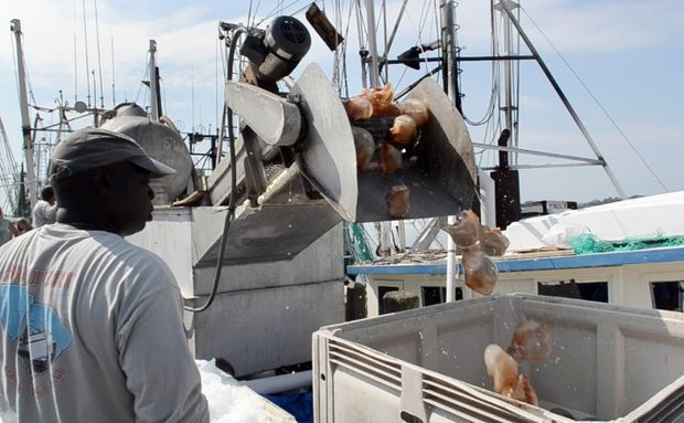 Can S.C. stomach a jellyfish industry?