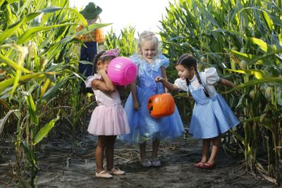 Boone Hall Fright Nights Pumpkin Patch And Corn Maze Are Back