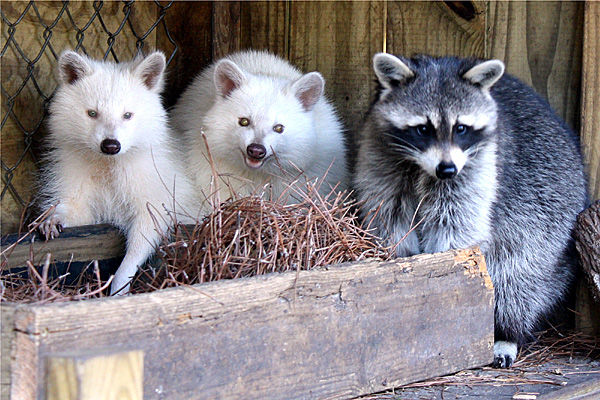 Snowball and pals
