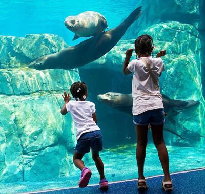 Riverbanks Zoo Sea Lion