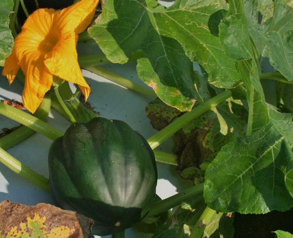 Time to plan garden Shop now for squash, cuke, melon seeds