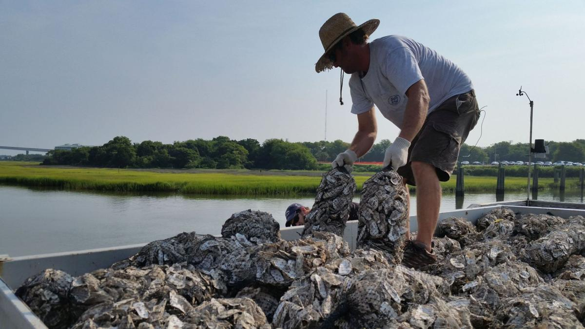 Patriots Point, DNR to build oyster reef near Yorktown
