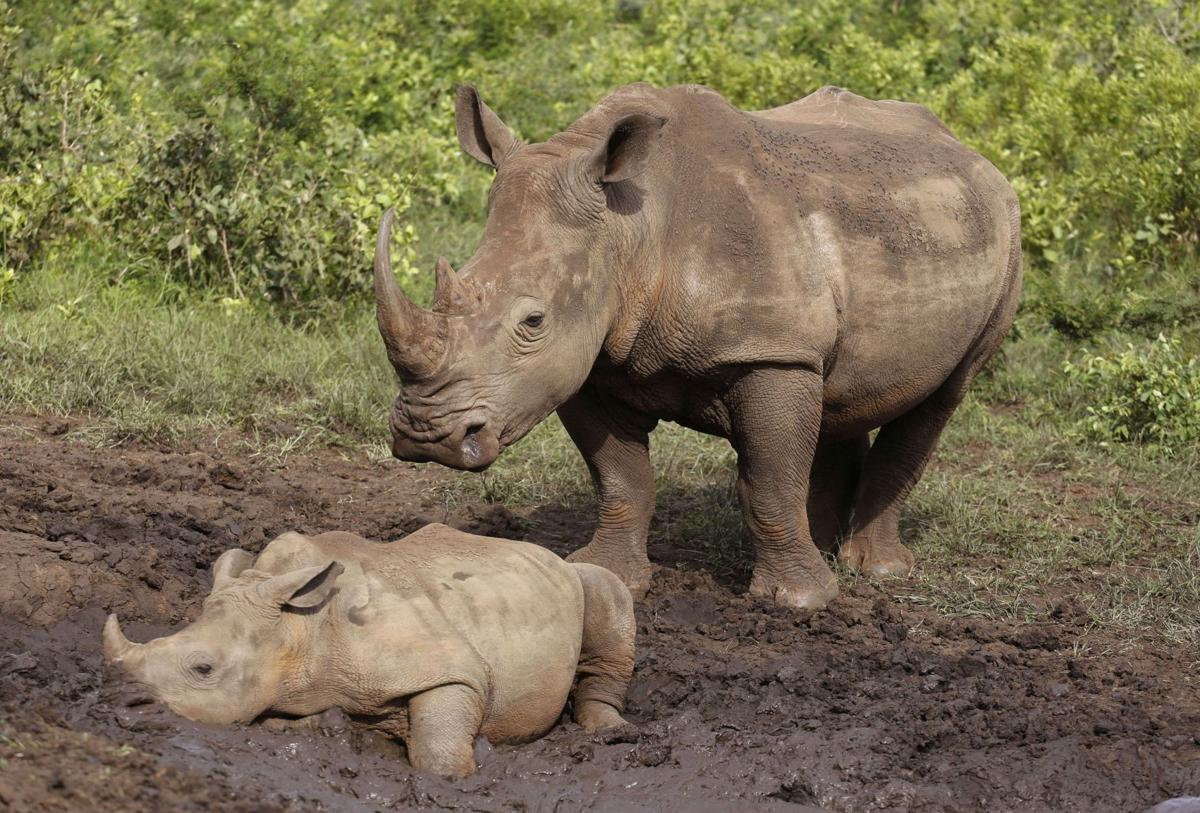Local rhino conservation group opens camp in S. Africa