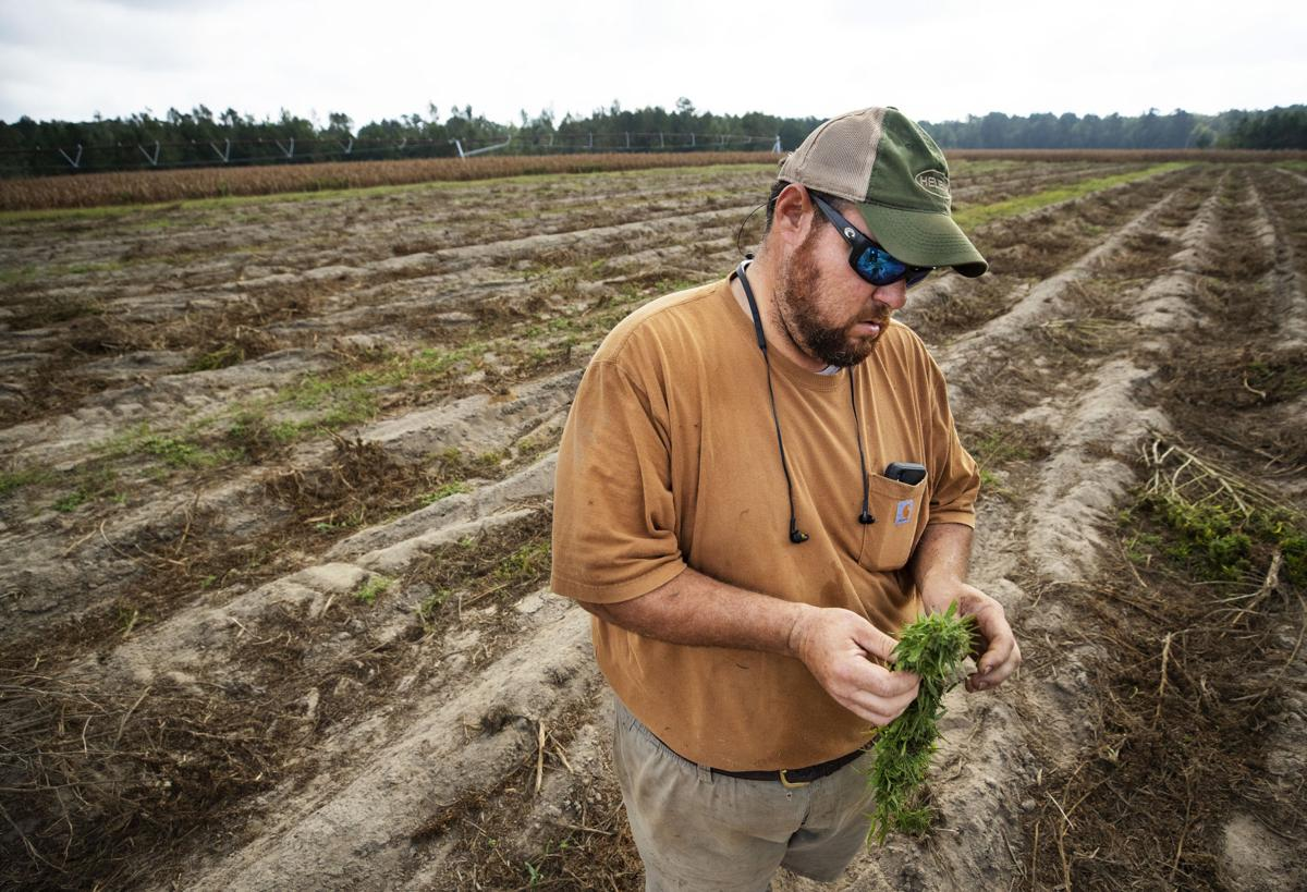 POST AND COURIER – Arrest of SC hemp farmer underscores growing pains for budding CBD industry