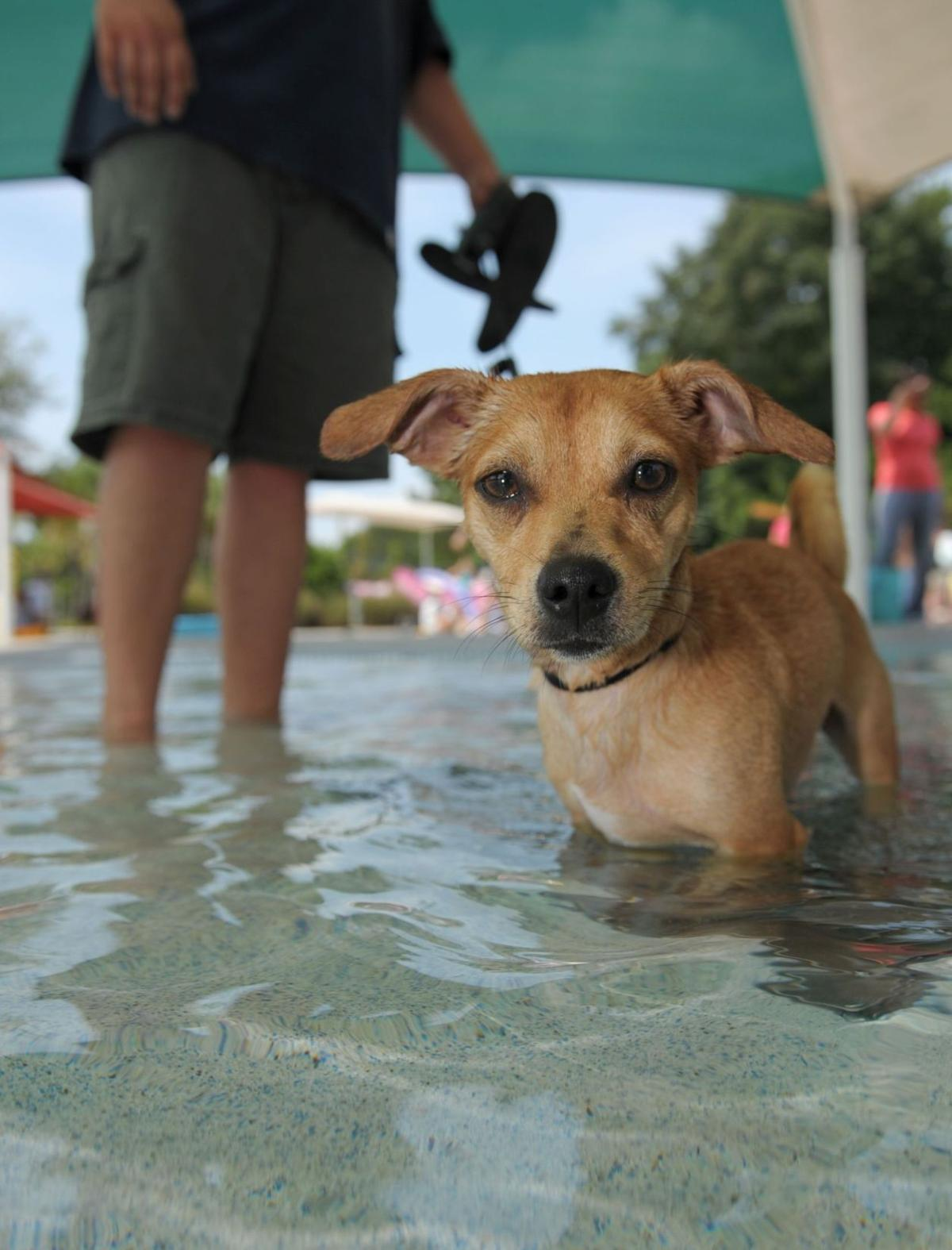 Whirlin' Waters goes to the dogs — literally