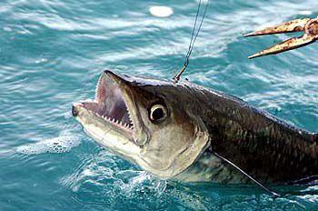 Mercury levels high in fish, agency warns (copy)