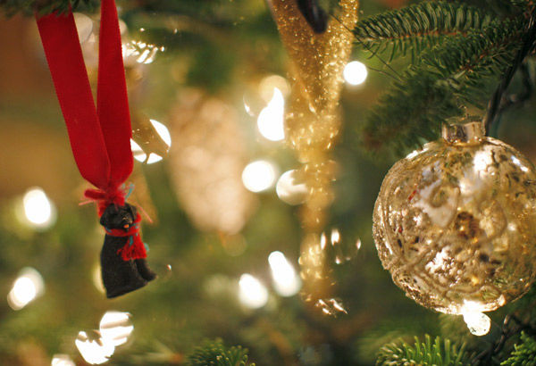 National Christmas Tree lighting tonight