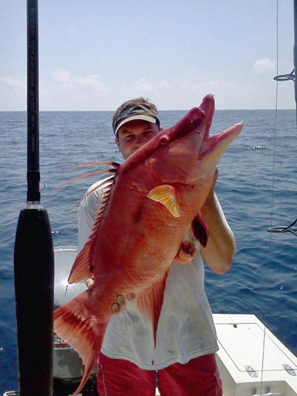 Hogfish catch possible new world record