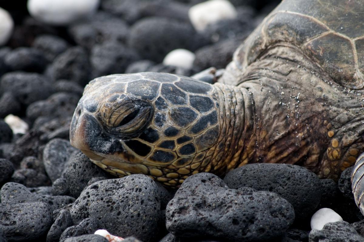 reader photos turtles photo galleries postandcourier com