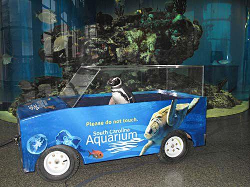 Aquarium on solid financial ground