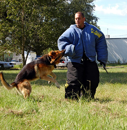 K-9 Odie retires after 9 years on the force