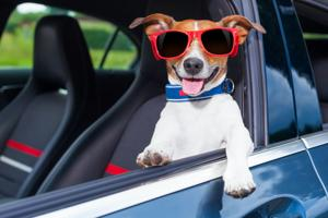 The Best Pooch-Friendly Vehicles for 2019: Models that your pets will love as much as you do