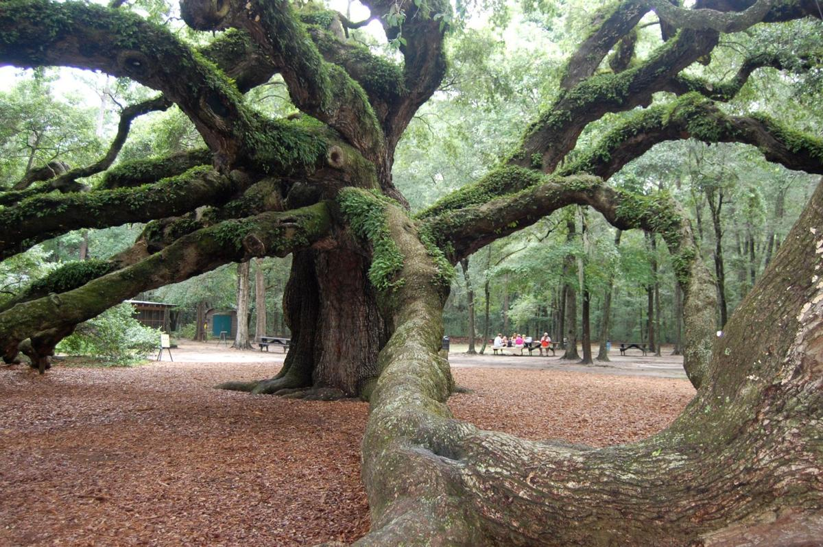 Protect the irreplaceable Angel Oak