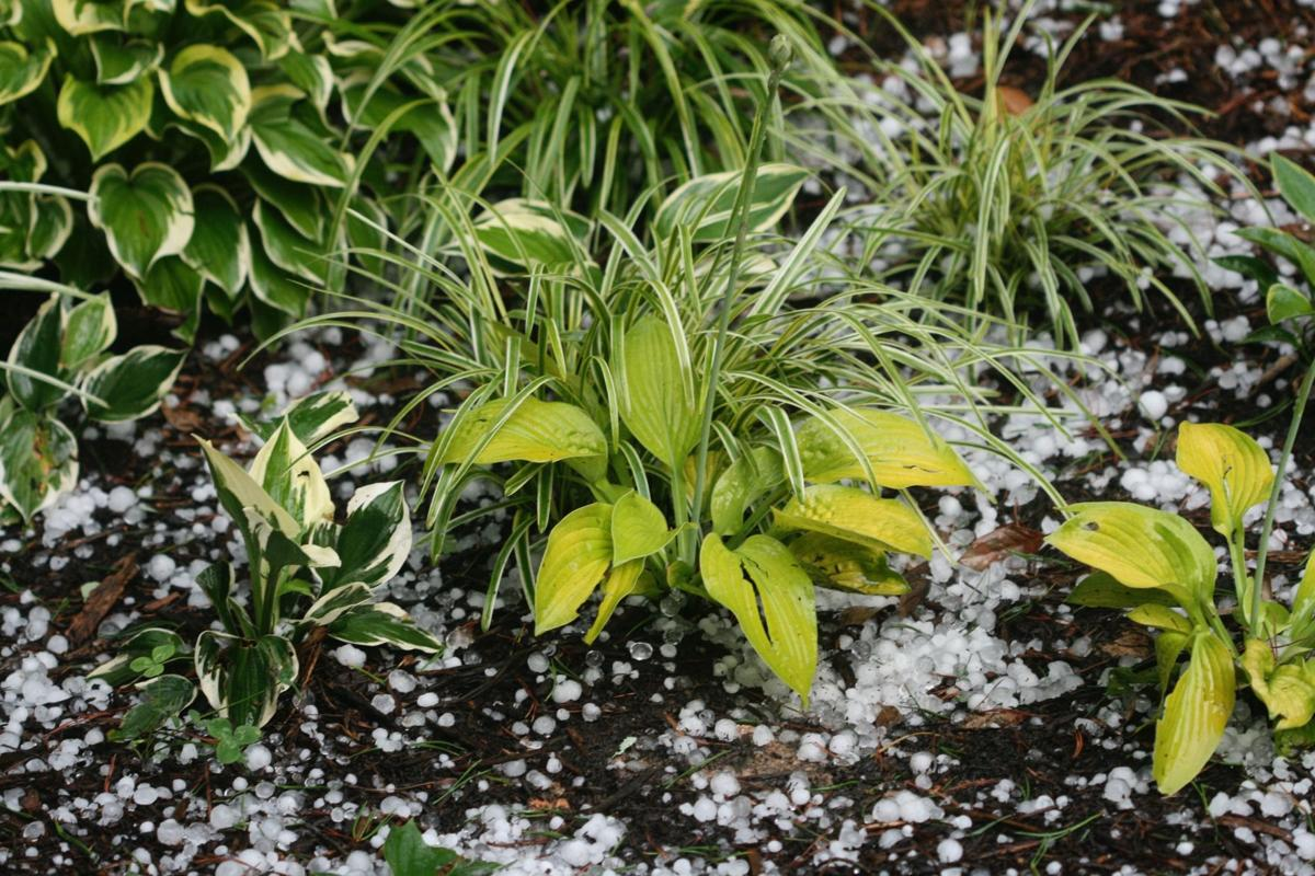 Savvy gardeners know climate, weather
