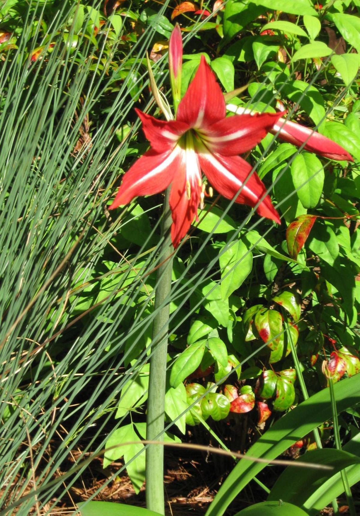 Recalling a timeless Southern gardener