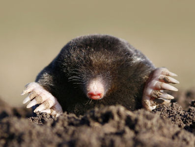 Hole-y Mole-y Lowcountry experts offer tips on getting rid of pesky moles