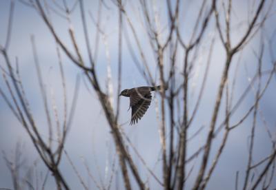 bird.JPG (copy)